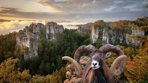 ForPost- Охотничье лобби в России поставило под угрозу животных из Красной книги