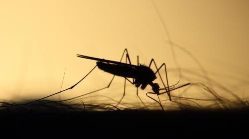 ForPost- Врачи рассказали, как избавиться от зуда после укусов комаров