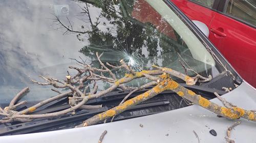 ForPost- СевСети #1288. Дилемма с мерседесом, падающие деревья и севастопольское такси