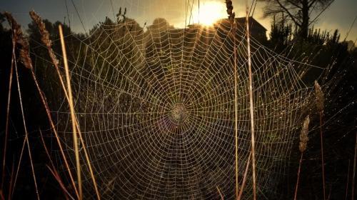 ForPost- Крым заполнили смертельно опасные пауки