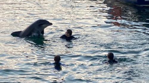 ForPost- Дружелюбный дельфин, который любил плавать с людьми, погиб