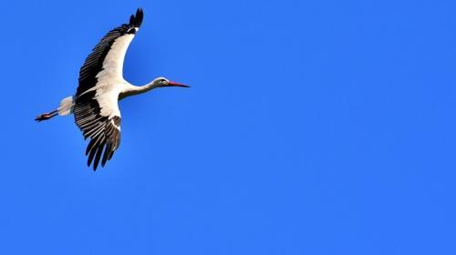 ForPost - Необычная птица облюбовала побережье Крыма