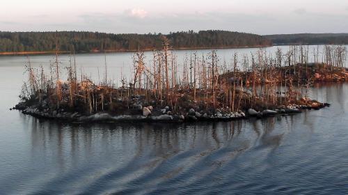 ForPost- Найден новый виновник самых глобальных вымираний на Земле