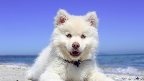 ForPost- В севастопольских клиниках можно привить кошек и собак от коронавируса