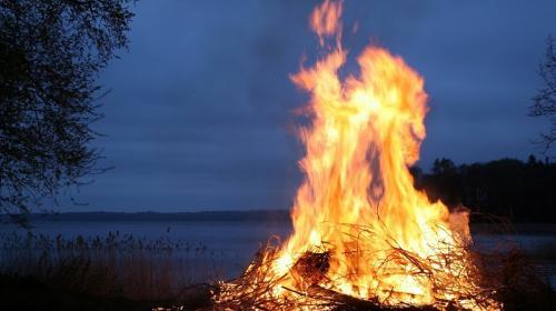 ForPost- Крымское озеро стало крематорием для птиц