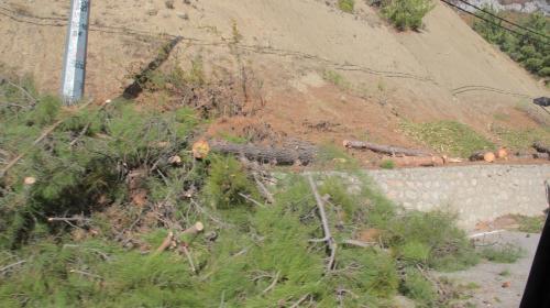 ForPost - Очередная вырубка хвойных деревьев под Севастополем оказалась законной