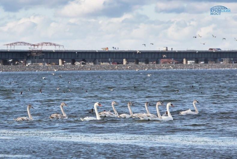 ForPost - Новости : Стройка Крымского моста не вредит окружающей среде