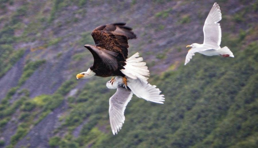 понедельник орлы и чайки фото часто