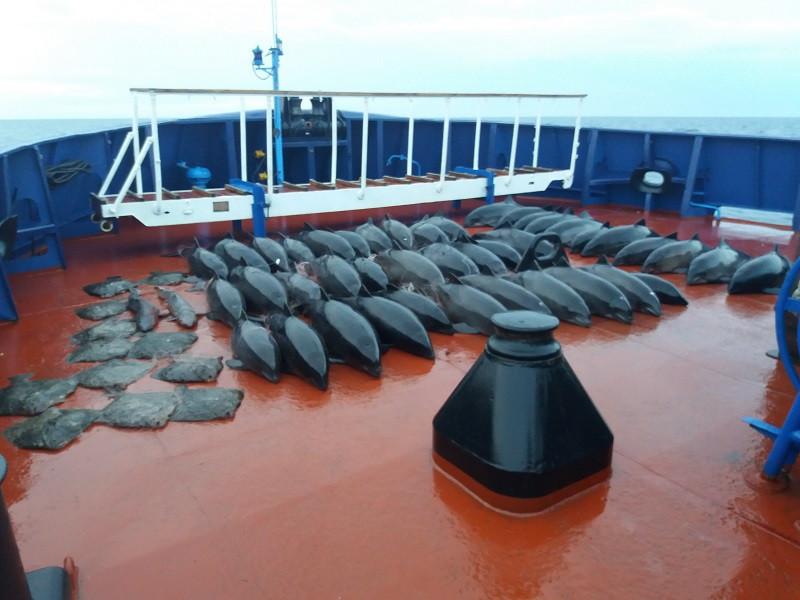 ForPost - Новости : Украинские браконьеры погубили 46 дельфинов