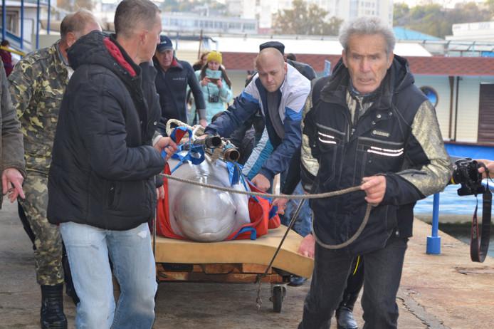 ForPost - Новости : Приставы изъяли животных из севастопольского дельфинария