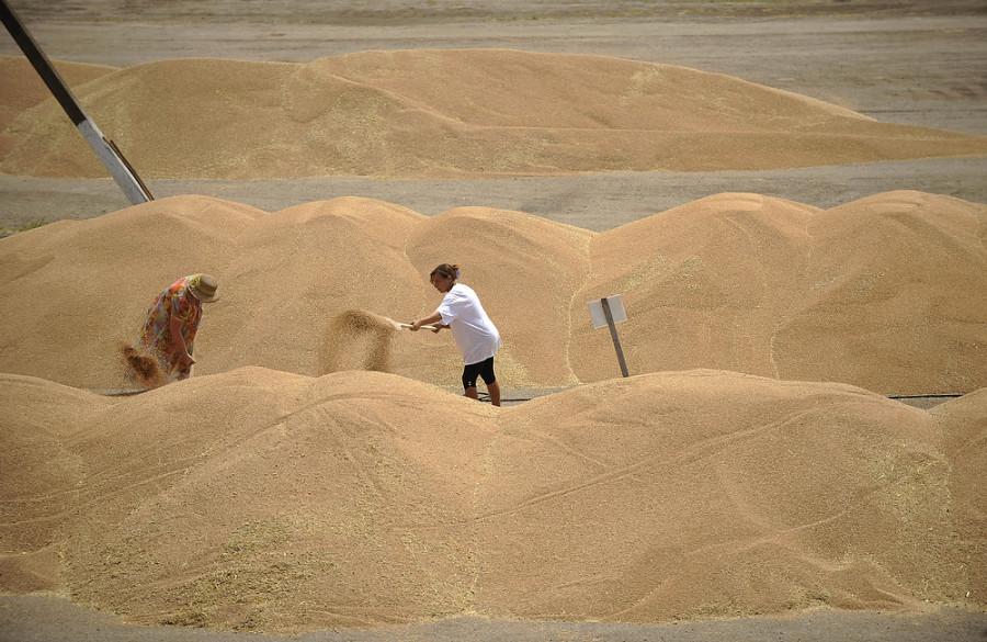 ForPost - Новости : В Минсельхозе Крыма просят приостановить экспорт зерна