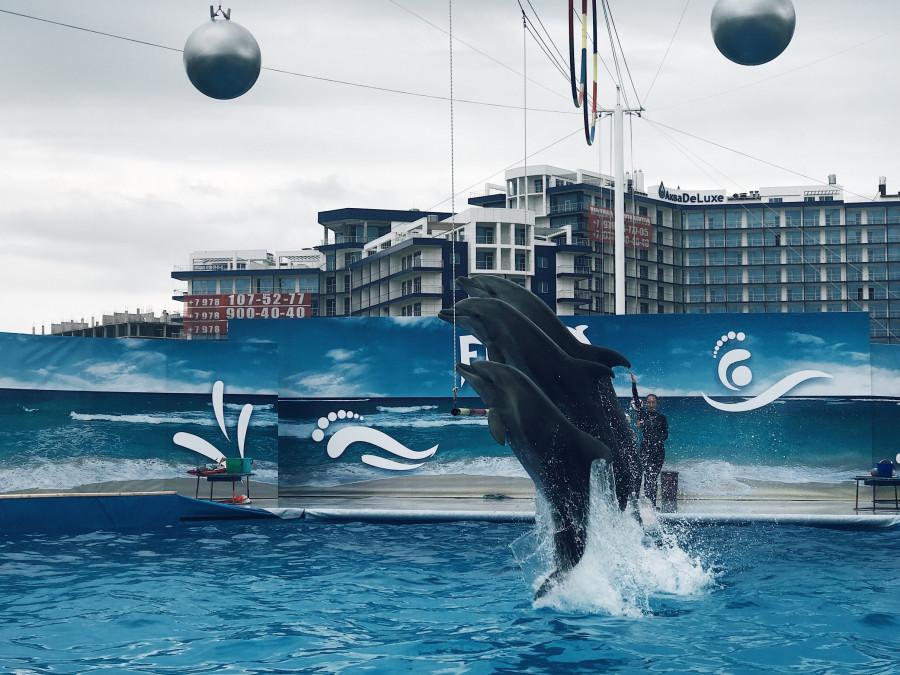 ForPost - Новости : Дельфины и морские котики переехали из Артбухты в новое место