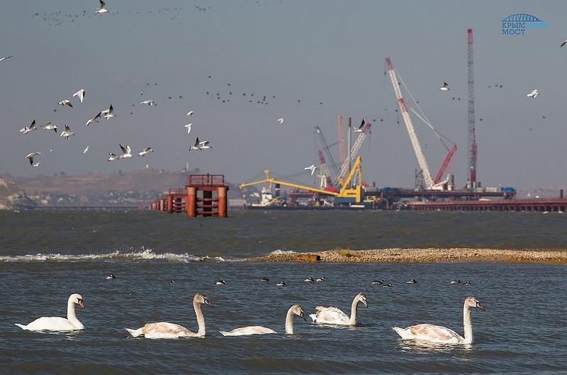 Крымские учёные в пух и прах разбили претензии Украины к Крымскому мосту