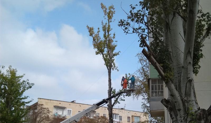 В Севастополе объяснили снос зелёных деревьев заботой о безопасности