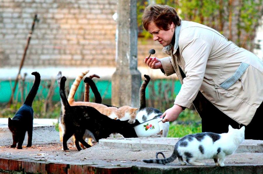 «Мнение». Стоит ли прикармливать во дворах котов и собак?