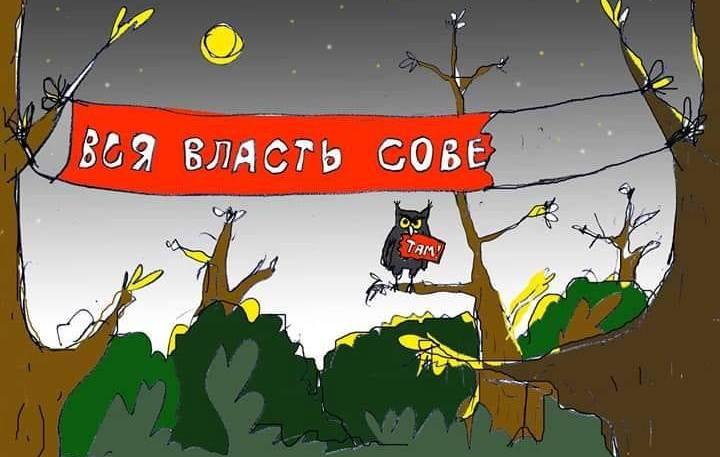 СевСети #588. Красный день календаря и праздничные котики Севастополя