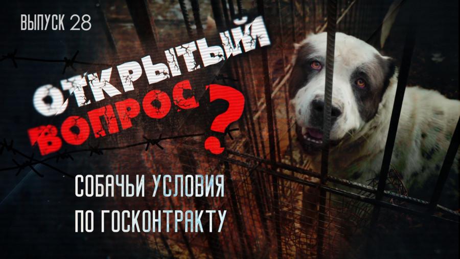 Открытый вопрос. О «собачьих условия» госконтракта в Севастополе