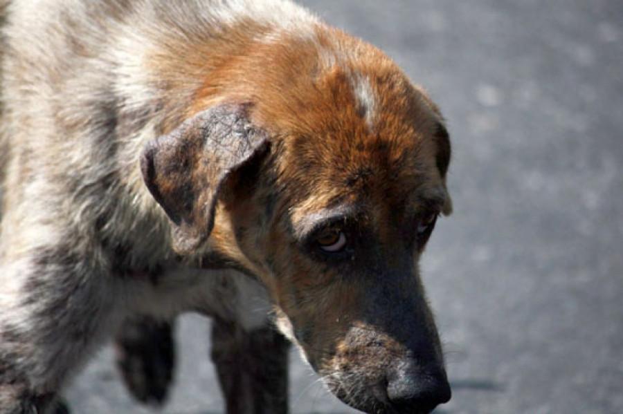 Прокуратура проверит, поедали ли в Подмосковье бездомных собак