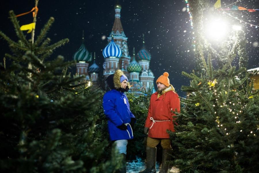 В Роскачестве рассказали, как выбрать новогоднюю елочку