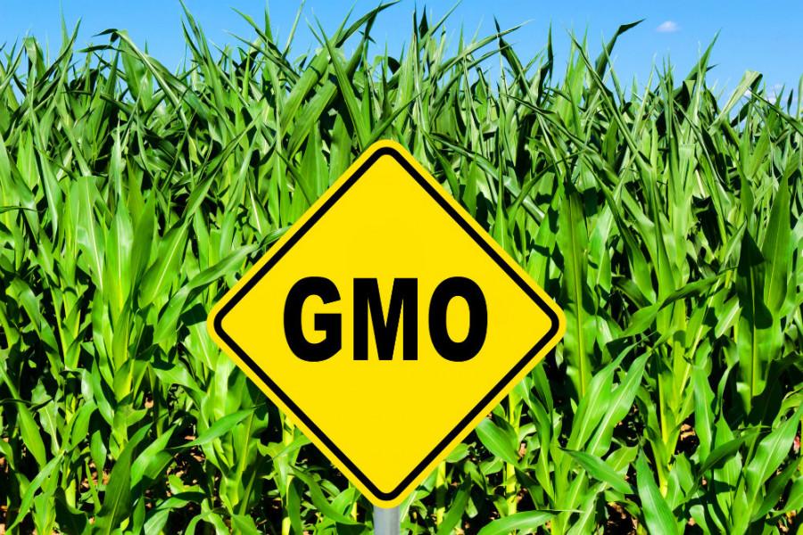 В Роскачестве рассказали, как узнать продукцию с ГМО