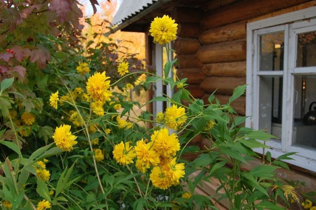 Признать садовый дом жилым с 1 января станет проще
