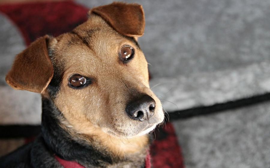 Выжить любой ценой: упавшая на скалы севастопольская собака двое суток ждала спасателей