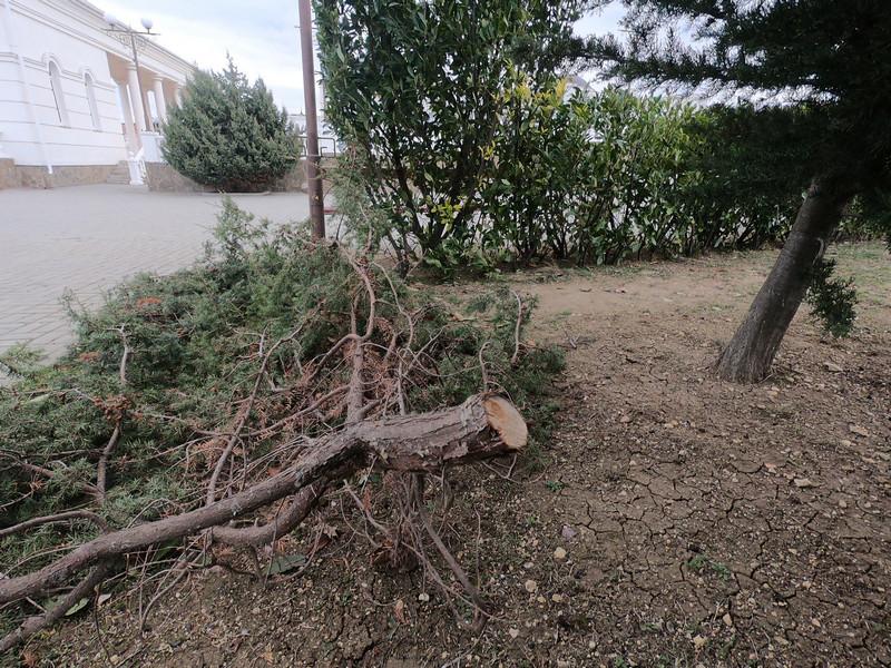ForPost - Новости : Со второй попытки Севприроднадзор обнаружил спиленный можжевельник