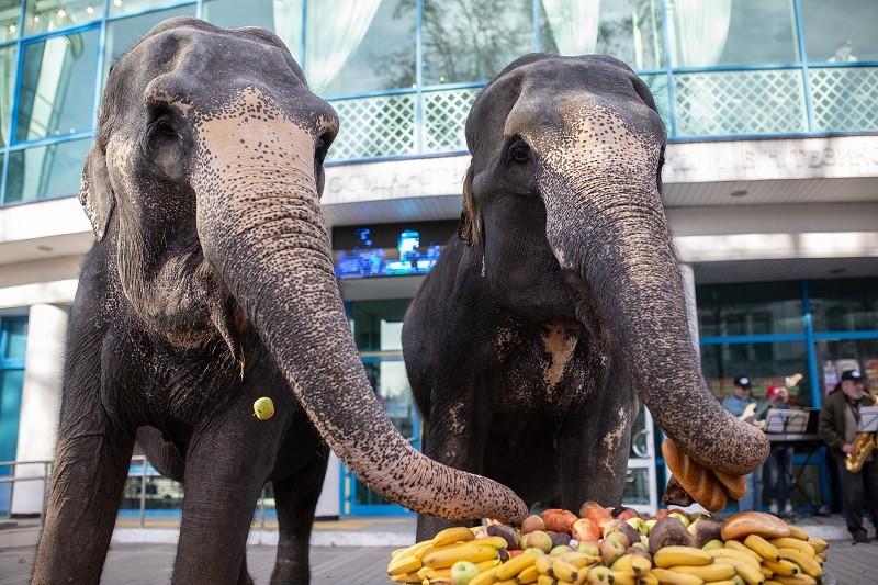 ForPost - Новости : Слоны из Германии устроили шоу в центре Симферополя