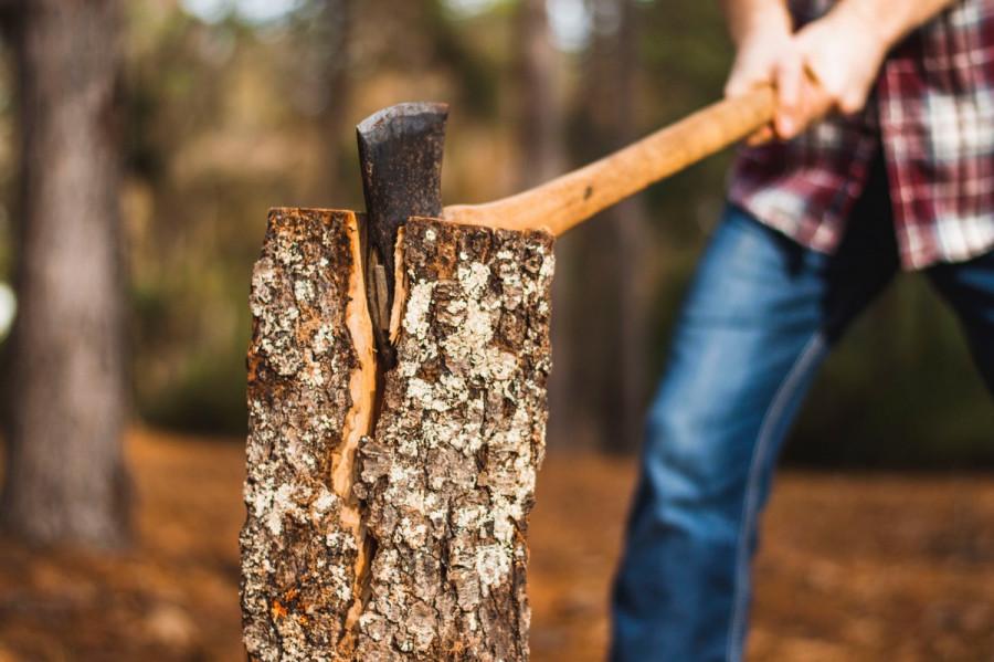 ForPost - Новости : В Севастополе предложили «драконовский» штраф за вырубку деревьев