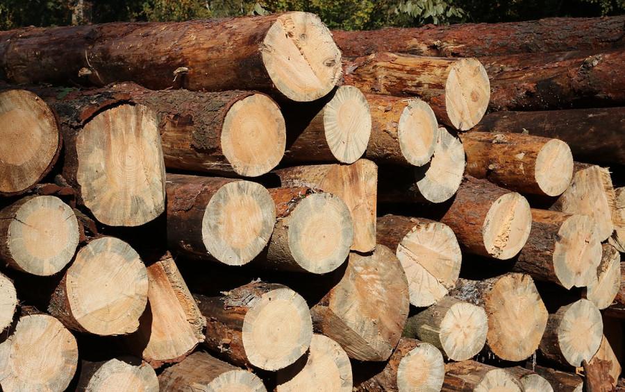ForPost - Новости : Стало известно, какую площадь охватит массовая вырубка лесов в Севастополе