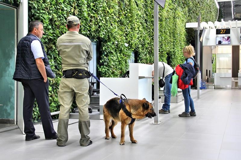 ForPost - Новости : Секретные дела собачьей службы: как работают кинологи в аэропорту Симферополя