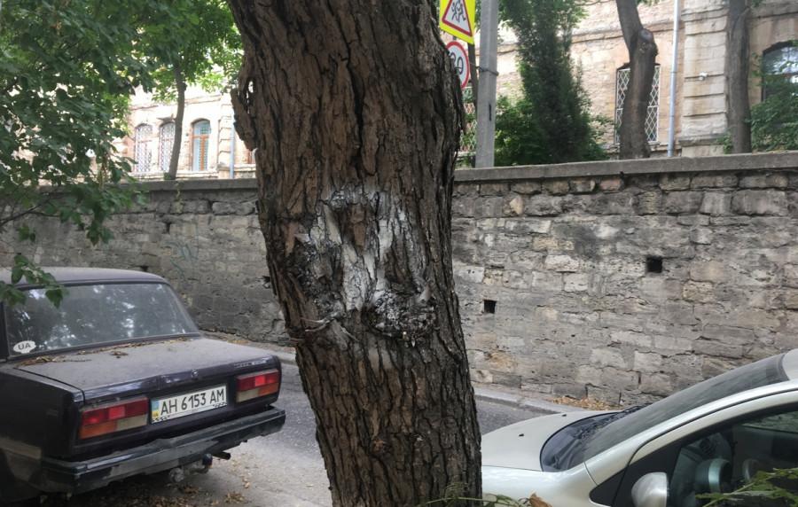 ForPost - Новости : В центре Севастополя идёт бой за каждое дерево