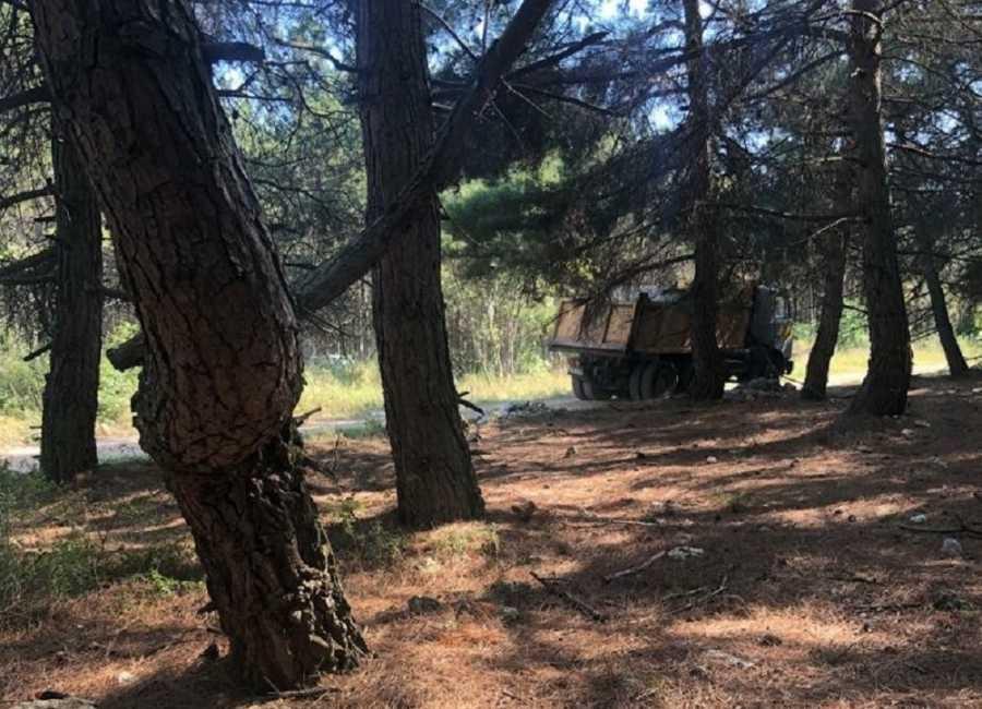 ForPost - Новости : Лес под Севастополем завалили стройотходами по просьбе хозяйки конюшни
