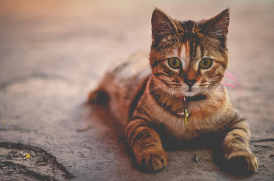 ForPost - Новости : Чипирование животных будет проходить бесплатно