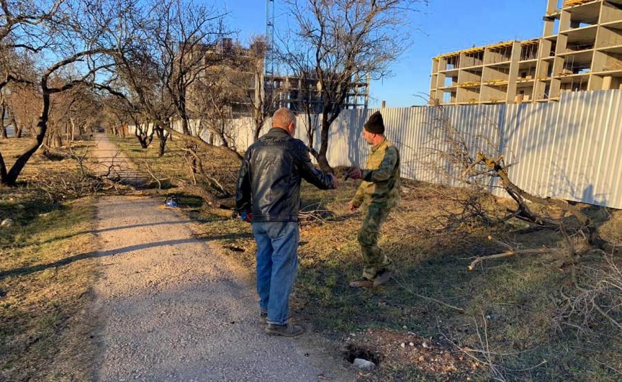 ForPost - Новости : В Севастополе под автостоянку вырубают миндальную аллею