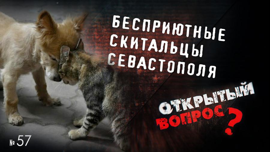 ForPost - Новости : Открытый вопрос. Кто готов спустить всех собак к правительству Севастополя?