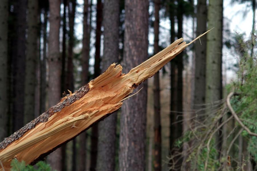 ForPost - Новости : Вандалы в Севастополе уничтожили молодые деревья на Сапун-горе