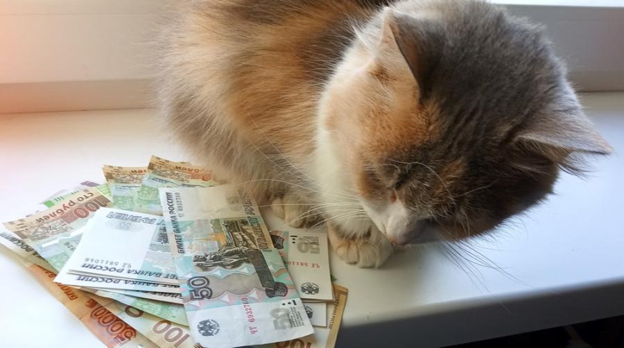 ForPost - Новости : В Севастополе определён банк для кредитов на зарплаты