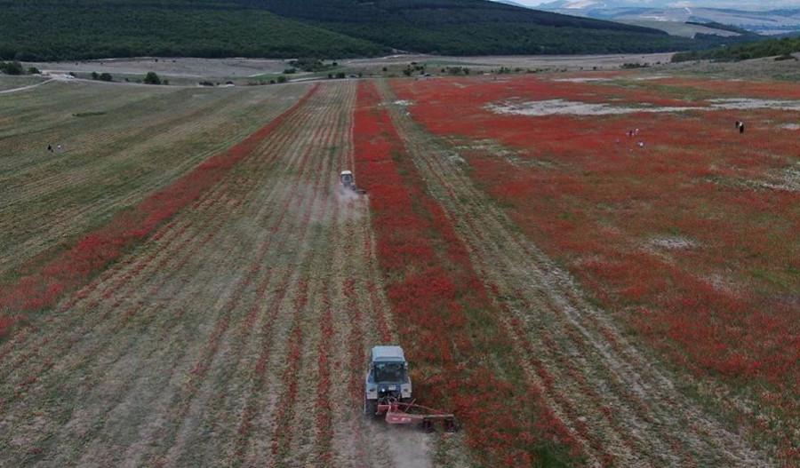 ForPost - Новости : Много шума из ничего: зачем уничтожили маковые поля под Севастополем