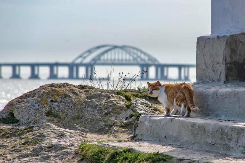 ForPost - Новости : Стало известно, где будет работать кот Мостик с Крымского моста