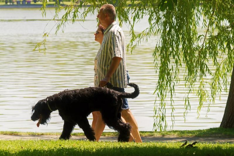 ForPost - Новости : В столице Крыма запретили выгуливать собак в парках