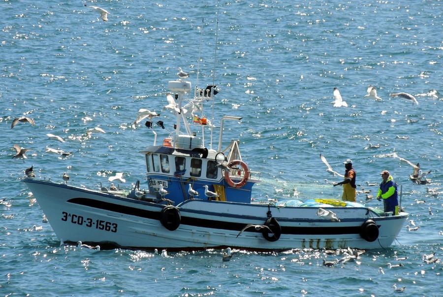 ForPost - Новости : Традиции рыболовецкого флота возвращаются в Севастополь