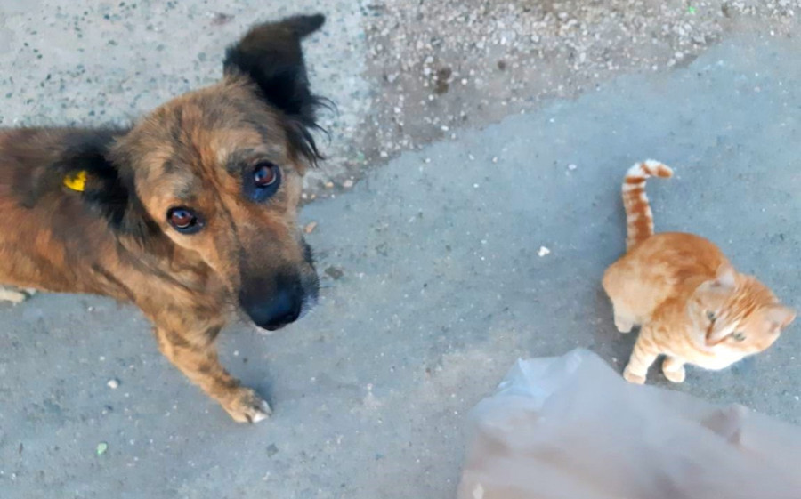 ForPost - Новости : За бродячими миллионерами Севастополя ходит голодная смерть