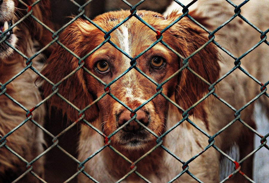 ForPost - Новости : Защитников животных в Севастополе обвинили во лжи