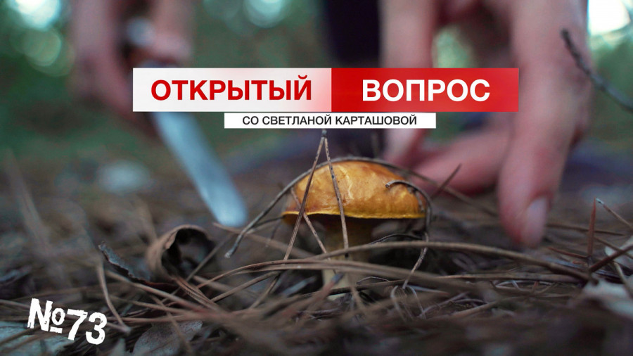 ForPost - Новости : Грибы наступают на Севастополь – берегитесь!