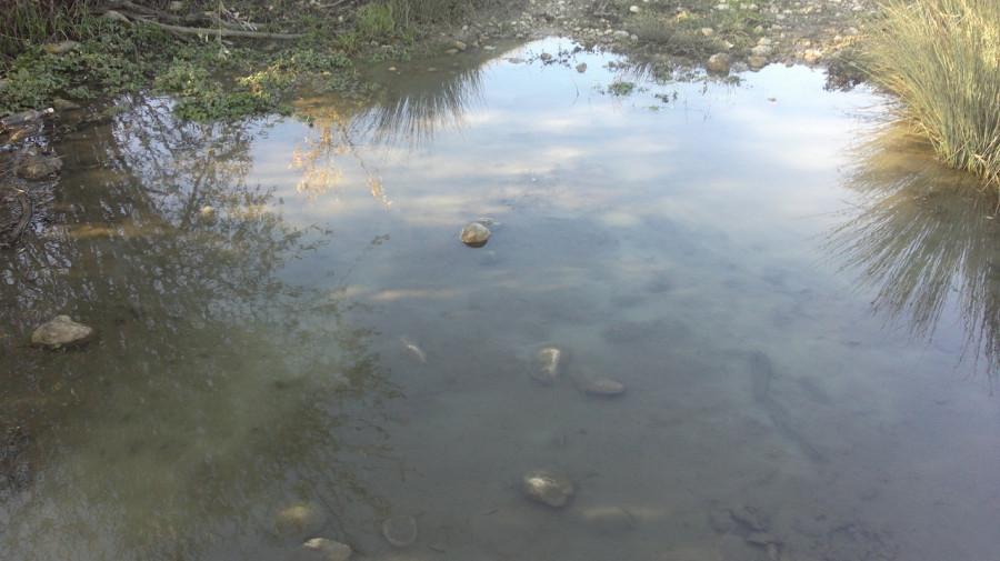 ForPost - Новости : В Севастополе заметили «мутную жижу» в Чернореченском водохранилище