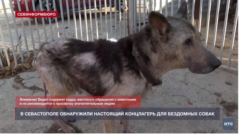 ForPost - Новости : Живые скелеты и трупы щенков обнаружили журналисты в приюте Севастополя
