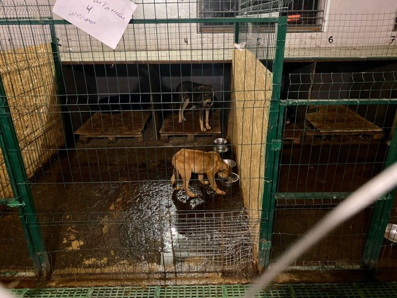 ForPost - Новости : «Концлагерем для животных» занялись силовики и власти Севастополя