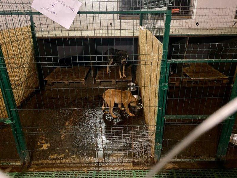 ForPost - Новости : Глава «Парков и скверов» Севастополя уволен после истории с концлагерем для собак