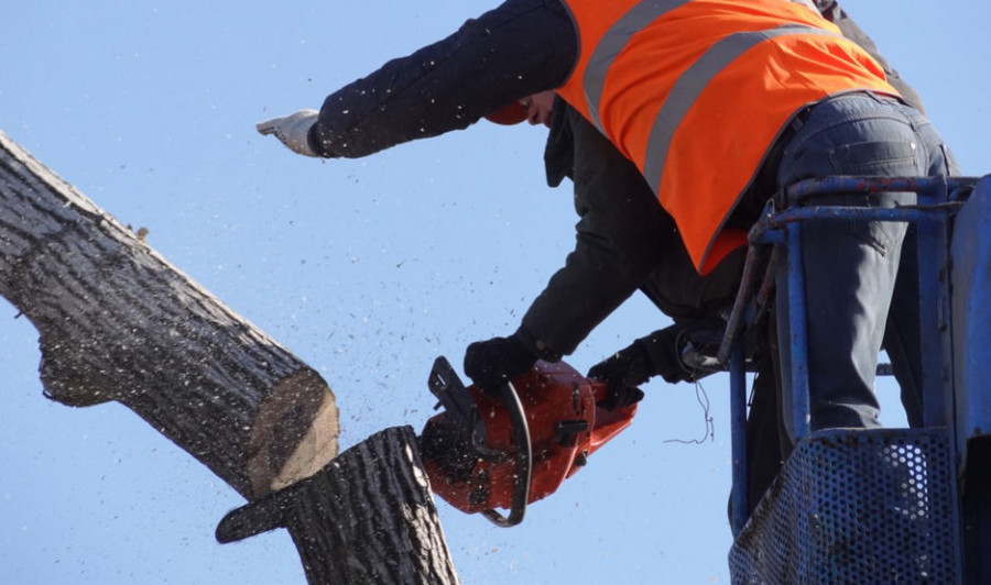 ForPost - Новости : На Максимовой даче в Севастополе срубили деревья